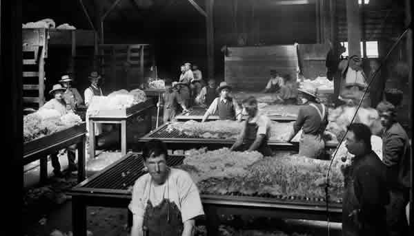 Wool Valuing Brief Memories Of Eric Hauff Wool Valuer